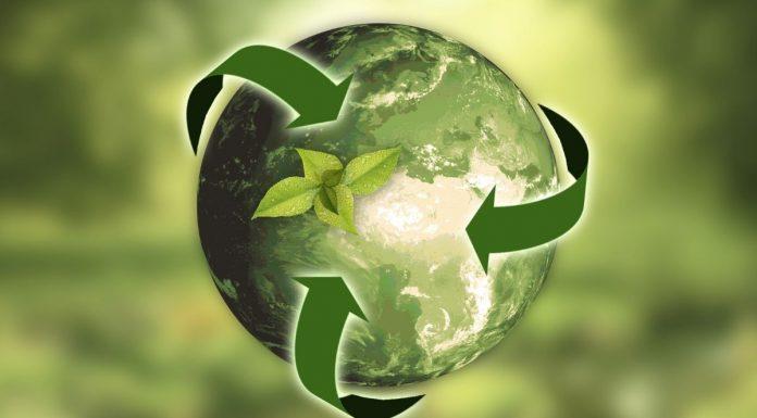 Marcas e Sustentabilidade